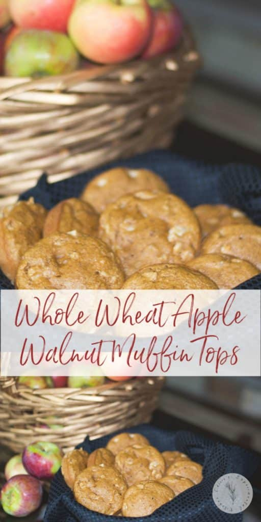 Apple Walnut Muffin Tops made with whole wheat flour, apples, applesauce and apple cider are perfect for breakfast or an afternoon snack.