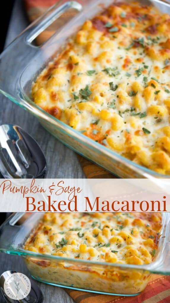 This Pumpkin & Sage Baked Macaroni screams Fall and makes a tasty, quick weeknight meal or as a starter for your holiday gatherings.