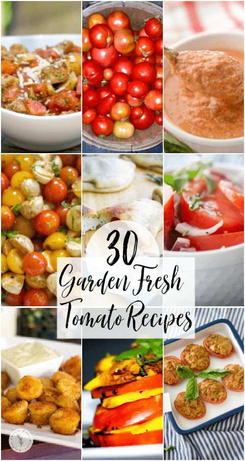 Garden Fresh Tomato Recipes